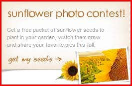 sunflower Free Package of Sunflower Seeds