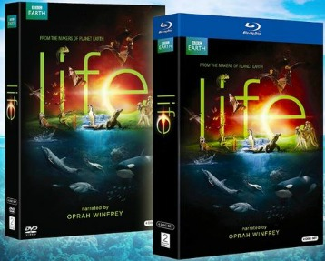 Life dvd and blu ray set BBC Life 4 Disc DVD or Blu ray Set Only $12.99 (reg. $59.98)